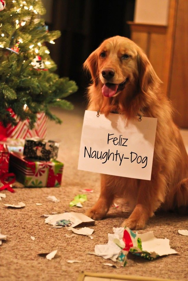 32 Doh! Dogs That Ruined The Holidays | Christmas | Funny ...