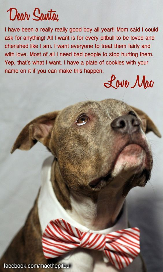 Best 25+ Pit bull quotes ideas on Pinterest | Are pit ...
