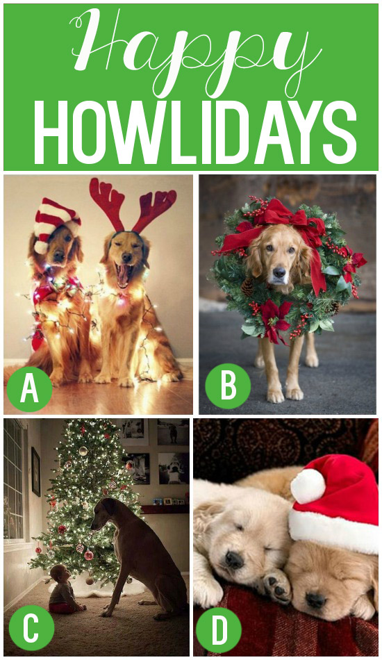 Christmas Card Ideas For Your Dog Use A Picture Of Pet ...