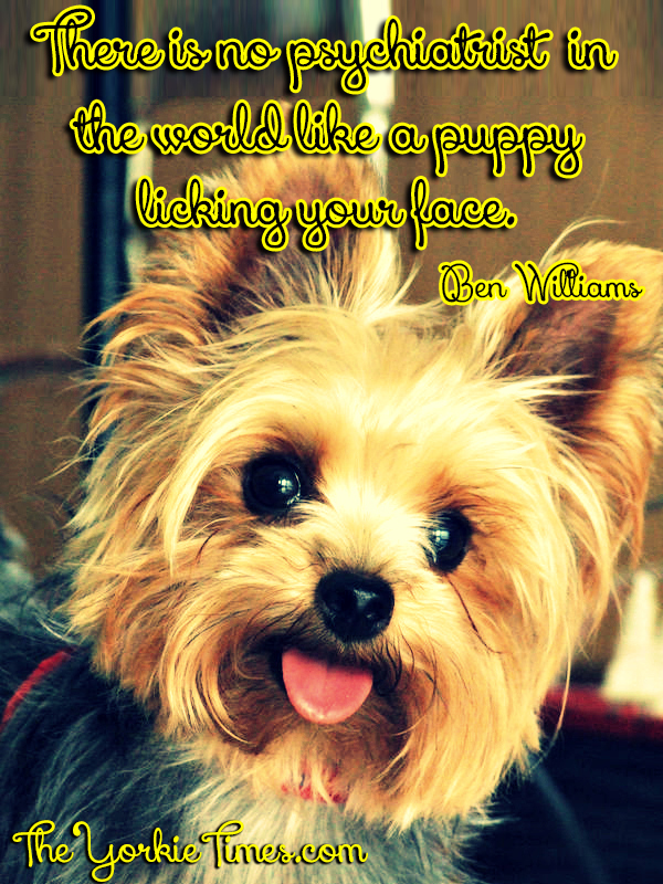 Quotes About Yorkies. QuotesGram